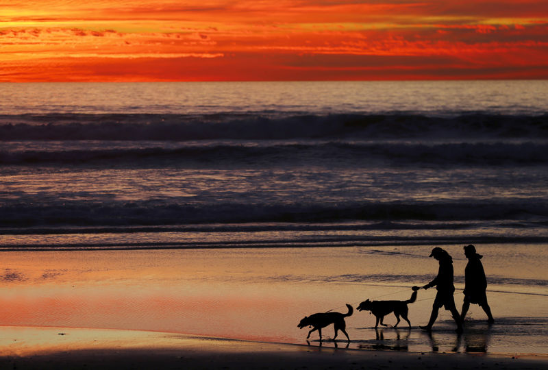 © Reuters. FILE PHOTO: People walk their dogs along the beach after sunset in Cardiff, California