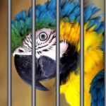 A Parrot Got Detained for Yelling 'Police' to Warn Its Owners About a Drug Raid