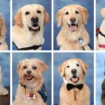 Stoneman Douglas High School Yearbook features the therapy dogs that helped students heal