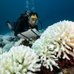 There's A New Guide For Saving Corals In A Warming World