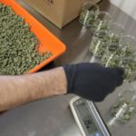 Promise of marijuana leads scientists on search for evidence