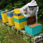 Bad weather causing 'catastrophic' French honey harvest