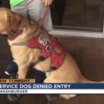 Family kicked out of Smashburger because of boy's service dog: 'I am going to make a big deal about it'