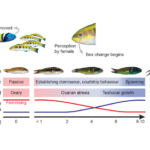Scientists Reveal Hidden Genetic Processes that Cause Sex Changes in Fish
