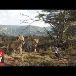 'The Lion King' Eyes $150M-Plus Domestic Debut   THR News