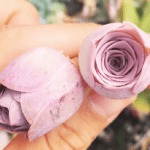 The internet is freaking out about these tiny succulents that look just like roses