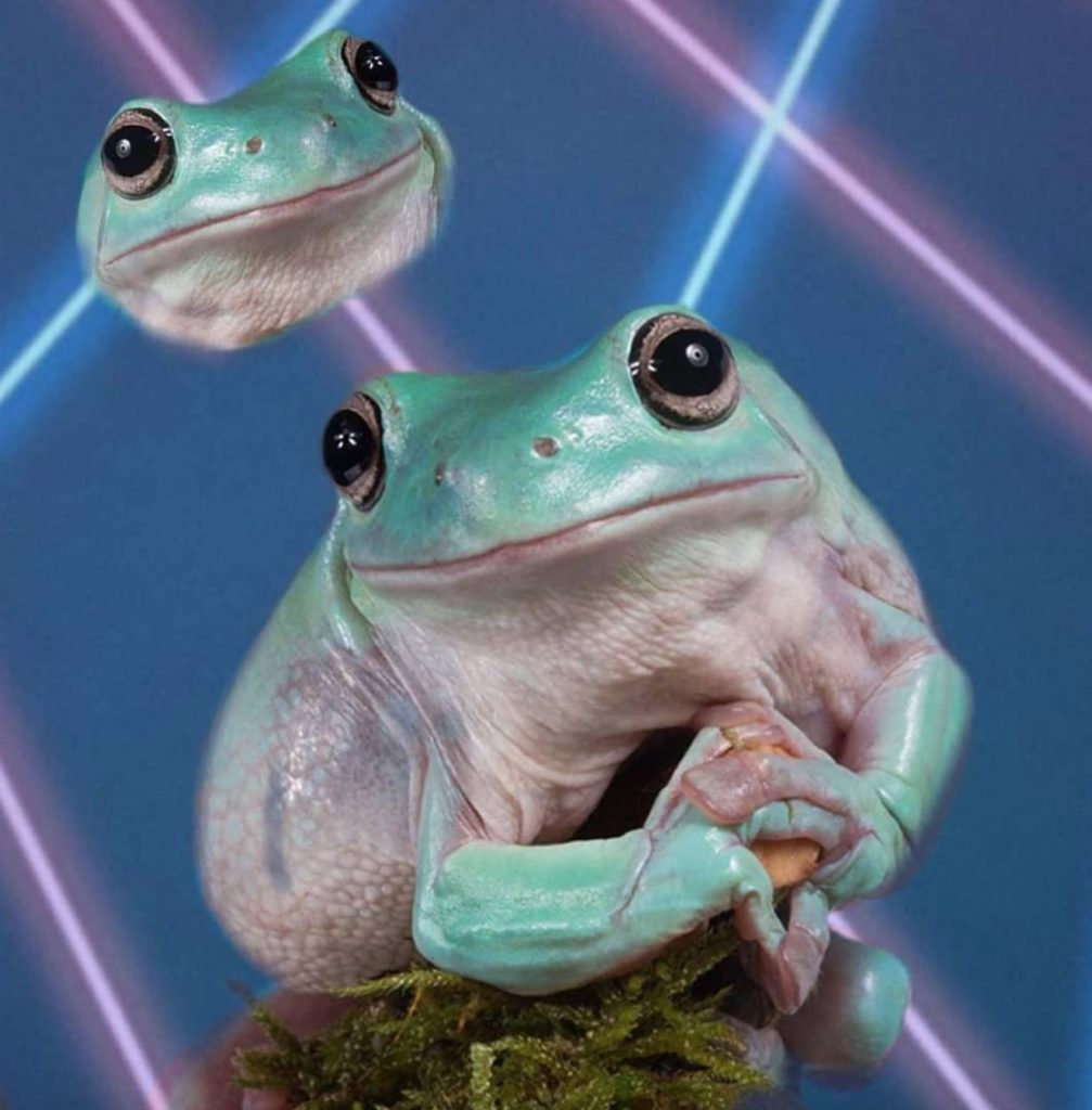 Exploring The Confusing Rise Of Frog Posting On Instagram E